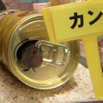 超得【割引きクーポン】ヨコハマおもしろ水族館を10倍楽しむ方法【横浜中華街】