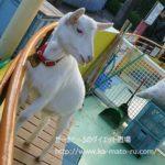 東京都江戸川区行船公園の自然動物園が無料でありがたい。