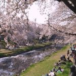 【野川】は花見の穴場だった!桜を見ながら22キロ歩いてみた。