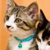 【里親詐欺】猫を譲る際には虐待目的の人間と取引しない事【マニュアル】