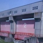 【新川】を全部歩いたらカルガモの縄張り闘争がすごかった