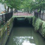 【埼玉県】新曽さくら川を全部歩いてみた 戸田市