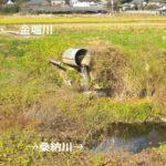 【坪井川】桑納川を全部歩いてみた【新川合流】バーミヤンの進化